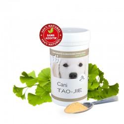 Cani TAO-JIE, cancer des ganglions lymphatiques, lymphome, cancer du système lymphatique, chien