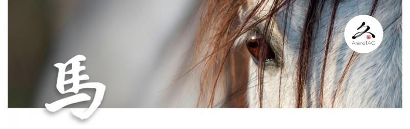 Complément alimentaire naturel pour les problèmes de vision chez le cheval.