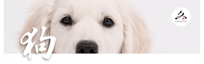 Complément alimentaire naturel pour les problèmes de vision chez le chien.