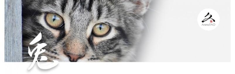Complément alimentaire naturel pour les problèmes de vision chez le chat.