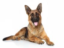 Soin et bien-être du chien en médecine chinoise