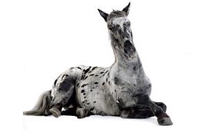 La phytothérapie chinoise pour chevaux