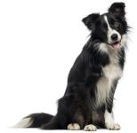 Soins naturels pour chiens