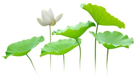 Soins naturels avec les plantes