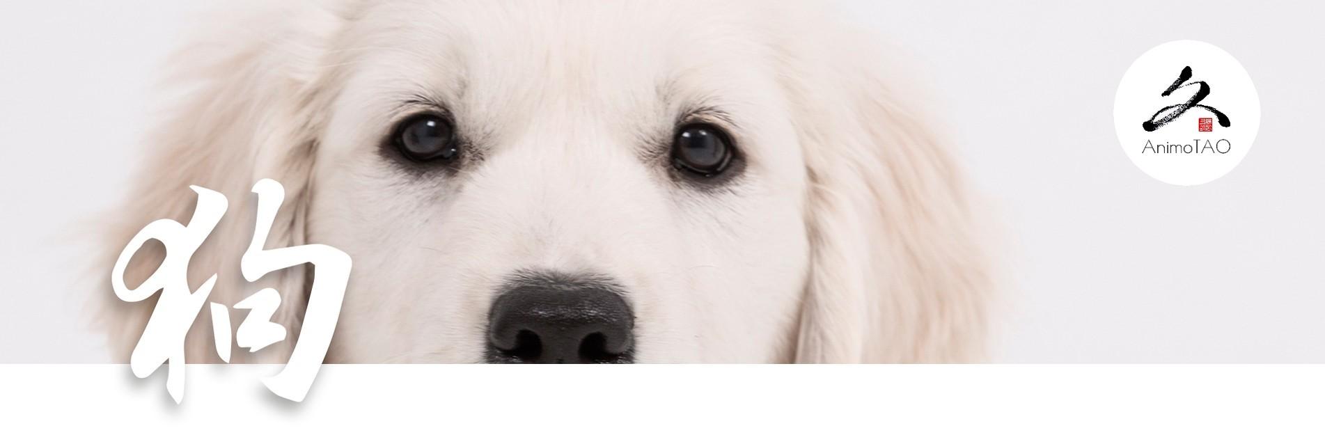 Compléments alimentaires pour chiens